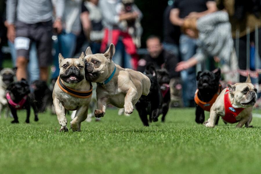 Neue Hundeverordnung: Zweimal täglich Gassi-Pflicht