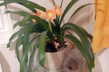 Was ist das für eine Pflanze, die selten blüht?
