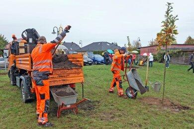 Die Mitarbeiter des Baubetriebshofes unterstützten die Baumspender pflanzen der Eichen und Ginkgos.