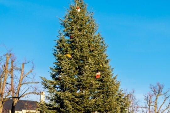 Besondere Bäume für besonderes Jahr