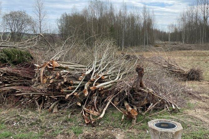 Der Wildwuchs auf der potenziellen Gewerbefläche im Wildenfelser Ortsteil Härtensdorf wird derzeit beseitigt.