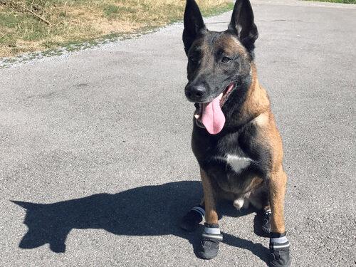 ad480fa223643c Ein Polizeihund trägt