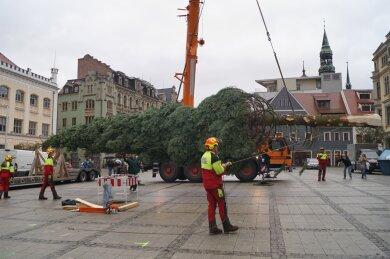 """Der Baum """"schwebt"""" auf dem Hauptmarkt ein."""
