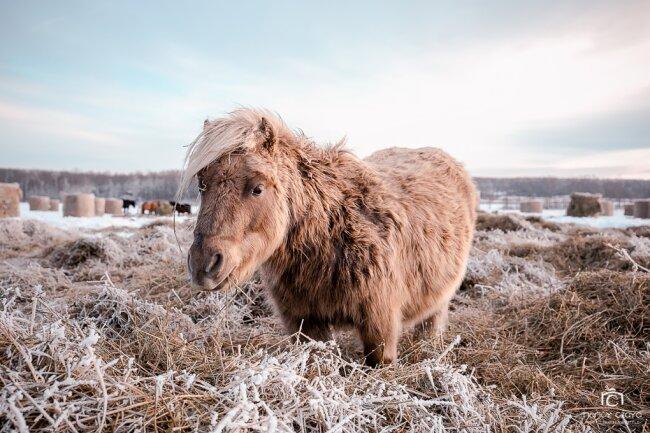 Nancy Czaya lebt auf einer Pferderanch, in der gerettete Pferde aufgenommen und versorgt werden.