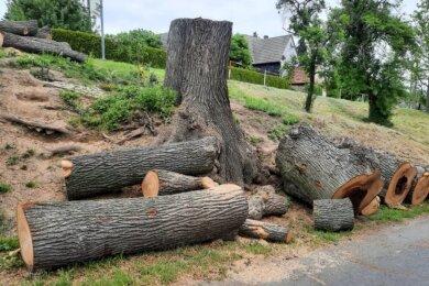 Das Holz der gefällten Linde wollen die Corbaer unbedingt behalten. Viele haben für ein Stück ihres ehemaligen Orts-Wahrzeichens eine ganz besondere Verwendung.