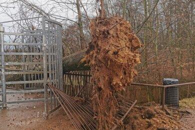 Erneut hat der Tierpark Hirschfeld einen Sturmschaden zu beklagen.