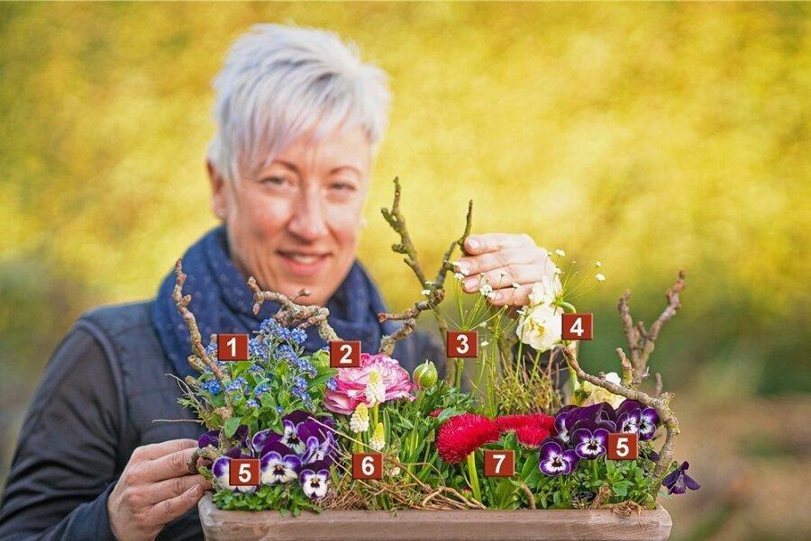 So eine Pracht! Floristin Jeannette Vojtisek spart nicht mit Blüten: 1 - Vergissmeinnicht, 2 - Ranunkel, 3 - Nordisches Mannsschild, 4 - Duftnarzisse, 5 - Hornveilchen, 6 - Weiße Traubenhyazinthe, 7 - Tausendschönchen.