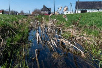 Der Schwarzbach im gleichnamigen Königsfelder Ortsteil ist teilweise verschlammt und zugewachsen, wie hier in der Nähe des Museums.