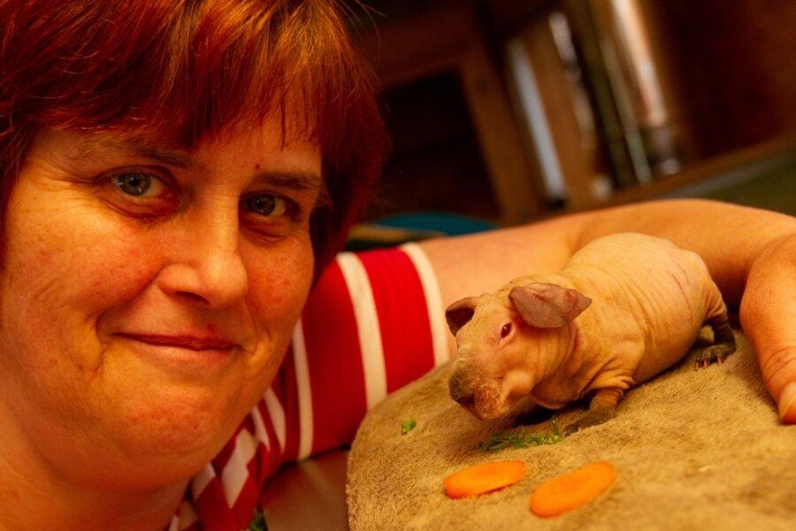 Ruhiges Silvester für Tierheimtiere