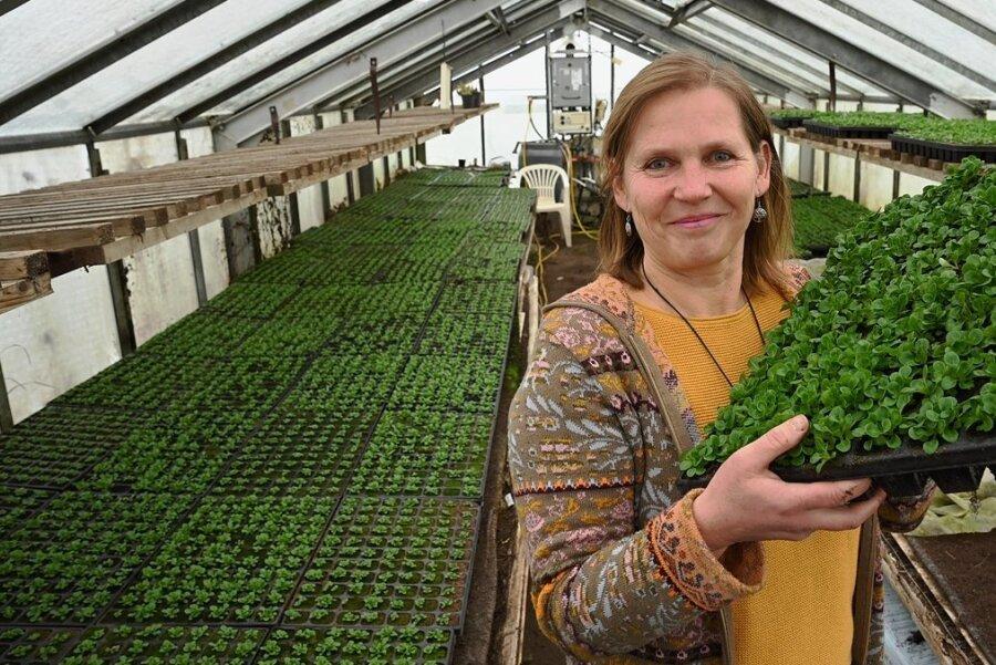 Silke Lucht, Mutter von vier Kindern, betreibt in Uhlsdorf den Guidohof. Gemüse, Salate und Obst, alles nach strengen Biostandards angebaut, liefert der Betrieb jede Woche zu Kunden in der Umgebung. Die Coronakrise hat dem Hof einen regelrechten Kundenansturm beschert.