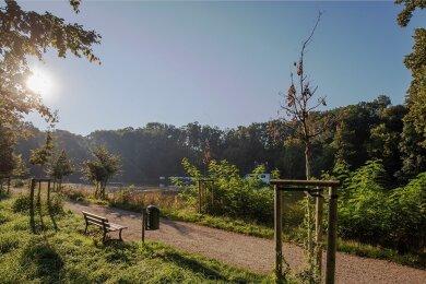 Entlang der vor drei Jahren sanierten Gründelallee in Glauchau sterben die jungen Bäume.