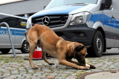 Drogenspürhund Pepe konnte in einer Wohnung Marihuana finden.