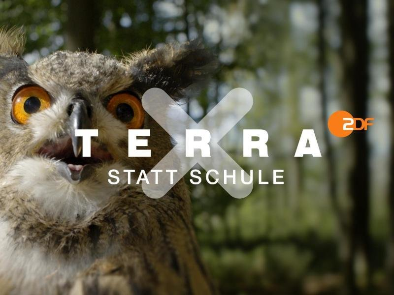 """Ein Ausschnitt aus """"Terra X statt Schule""""."""
