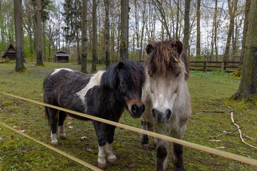 Im Tiergehege stehen große Veränderungen an. Unter anderem ist geplant, die Ponys abzugeben.