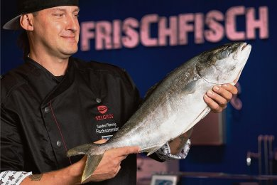 Als Sandro Dietrich diese Gelbschwanzmakrele präsentierte, hieß er noch Flemming. Am Wochenende hat er geheiratet. Der Fisch ist in Aquakultur im Saarland groß geworden. Ursprünglich stammt die Art aus Australien. Dort ist sie als Kingfish bekannt.