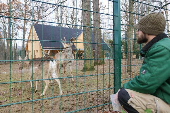 Chemnitzer Tierpark eröffnet neues Hirsch-Gehege