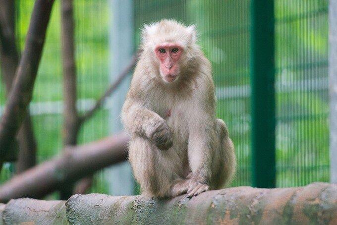 Affen im Tierpark Annaberg sitzen bei großer Hitze auf dem Trockenen