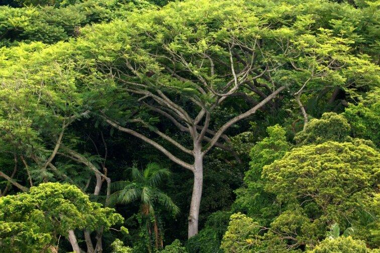 Besonders in Regenwäldern und Weltmeeren vermuten Wissenschaftler etliche Forschungsansätze für die Medizin. Generell führen viele Tiere die Forscher zu erstaunlichen Erkenntnissen.