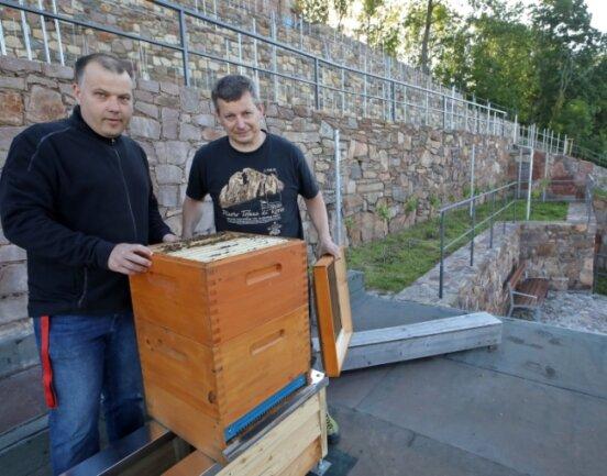 Jens Kühn und Michael Göckeritz schauen nach, ob das Bienenvolk den Umzug an den Weinberg gut überstanden hat.