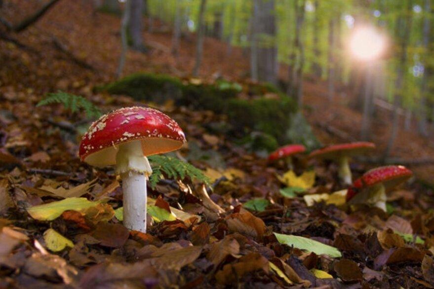 Herbstlicher Gruß im Wald