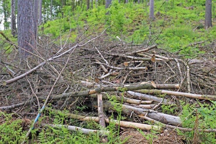 Noch sind Reste von Totholz im Waldgebiet abgelagert. Bald soll frisches Grün dominieren.