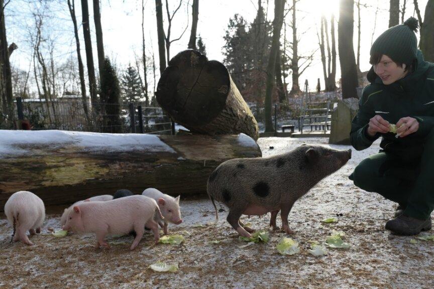 Zootierpflegerin Patrizia Weidlich im Gehege der Minischweine, wo es ebenfalls Nachwuchs gibt.