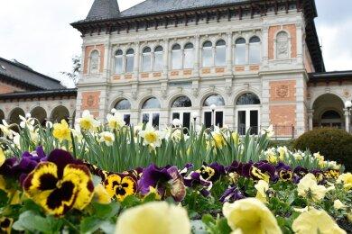Frühling vor dem Königlichen Kurhaus: Dieses Jahr steht die Narzisse im Mittelpunkt. Verschiedene Gruppen und Größen sind in den Gartenanlagen der Sächsischen Staatsbäder GmbH zu finden.