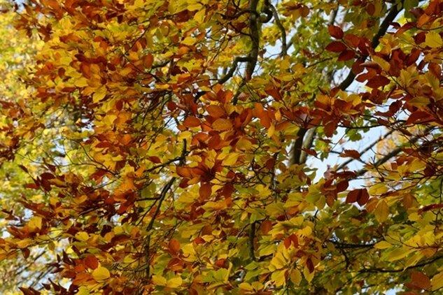Zeit fürs Abschiednehmen - Das Gartenjahr wird im November beendet