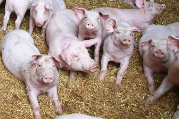 Rege Debatte über umstrittenes Schweinestallprojekt in Königshain