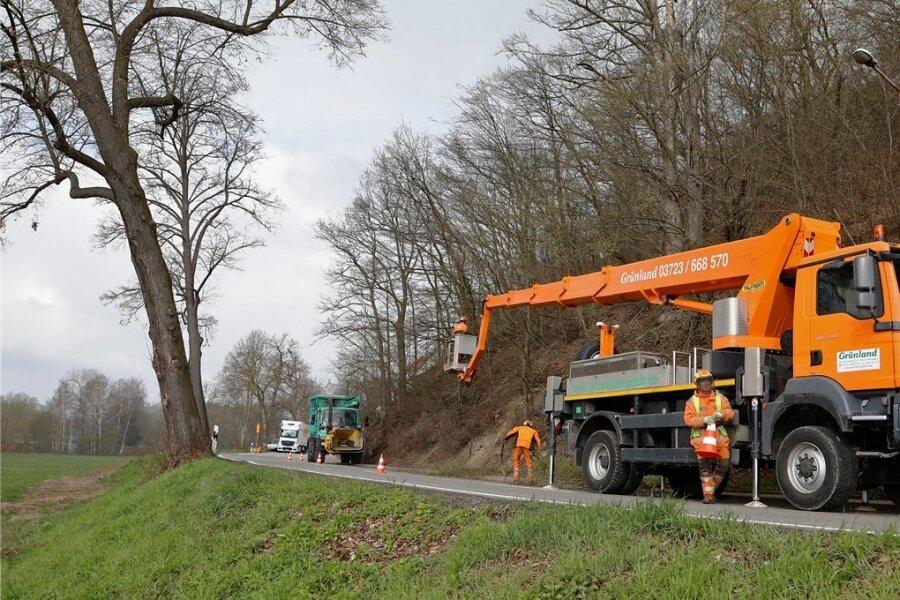 Die Baumfällungen im Rotenberg-Waldgebiet in Waldenburg haben begonnen. Dadurch kommt es voraussichtlich bis zum Freitag zu Behinderungen auf der B 175. Mit Ampeln, die an wechselnden Standorten aufgestellt werden, kann der Verkehr an den Engstellen vorbeigeleitet werden. An den Stellen, die selbst von der Hebebühne aus nicht erreichbar sind, sollen Baumkletterer zu einem späteren Zeitpunkt bei den Fällungen helfen. Dort, wo die Kettensägen rattern, macht sich auch eine Sperrung der Waldwege erforderlich. Darauf wird mit entsprechenden Schildern hingewiesen. Die Kosten für die Verkehrssicherungsmaßnahmen im Privatwald belaufen sich auf 20.000 bis 25.000 Euro. Die gefällten Buchen verbleiben als Liegendholz im Waldbestand. Die Probleme mit der Standsicherheit am Steilhang werden vor allem auf die Trockenheit zwischen 2017 und 2019 zurückgeführt.hof