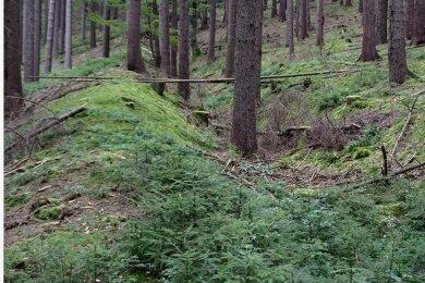 Der hohe Wall der historischen Verteidigungsanlage im Wald oberhalb der Landesgemeinde ist gut erhalten.