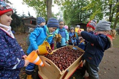 """Die Kinder in der Kita """"Kinderparadies"""" im Glauchauer Stadtteil Niederlungwitz sammeln gemeinsam Eimer- und Bollerwagenweise Kastanien."""