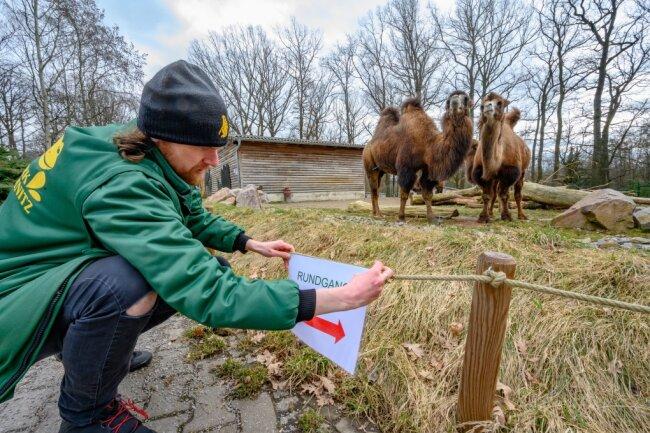 Zu den Einrichtungen, die öffnen wollen, gehören der Tierpark und das Wildgatter Chemnitz. Pro Stunde dürfen jeweils bis zu 80 Besucher eingelassen werden. Damit die Abstandsregeln eingehalten werden können, schildert Zoopädagoge Jan Klösters im Tierpark ein Rundwegsystem aus. Besucher müssen sich spätestens einen Tag vorher telefonisch oder per E-Mail anmelden.