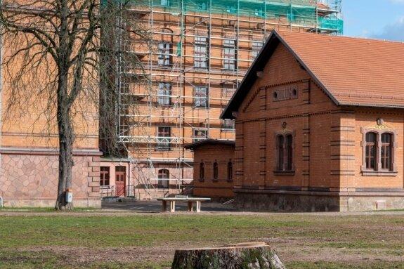 Bald werden auch die Baumstümpfe entfernt, damit auf dem Gelände des Gymnasiums ein moderner Sportplatz gebaut werden kann.