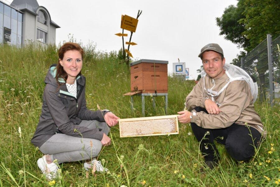 Firmenbienen in Oelsnitz liefern den ersten Honig