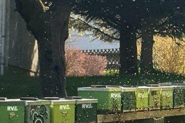 Bienen auf dem Gelände der RVE.