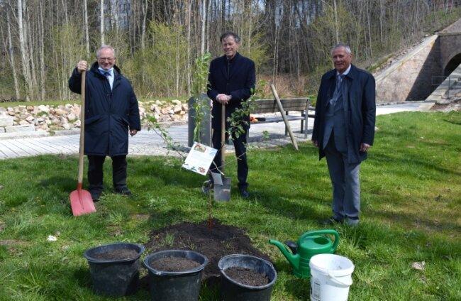 Brachten den Baum in den Boden: Thomas Firmenich, Matthias Rößler und Udo Seiffert (v. l.).