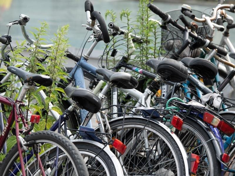 Unkraut wuchert zwischen Fahrrädern an einer Abstellanlage am Hauptbahnhof Dresden.