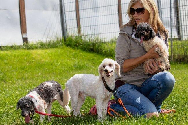 Insgesamt 15 Tiere wurden vorigen Freitag ins Tierheim Kandelhof gebracht. Sieben Hunde konnten nur noch tot aus der Wohnung im oberen Vogtland geborgen werden. Im Foto: Tierheim-Ehrenamtlerin Kerstin Gotte.