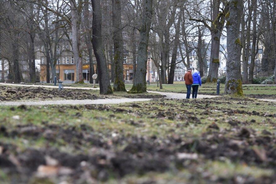 Wildschweine ackern Park um