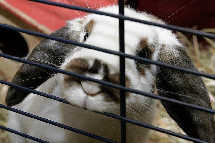 Kaninchen im Kinderzimmer-Käfig: Über-Liebe für einen Gebrauchsgegenstand?