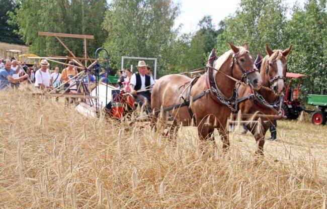 Die Pferde Hella und Heike zogen in aller Seelenruhe den Mähbinder von Siegfried Funke am Feld in Niederbobritzsch entlang.