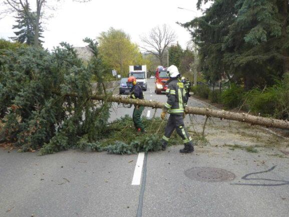 Im Zwickauer Stadtteil Marienthal blockierte ein umgestürzter Baum den Verkehr auf der Werdauer Straße.