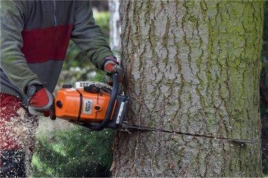 Ab März wird das Baumfällen in Sachsen durch das geänderte Naturschutzgesetz erschwert. Die schwarz-rot-grüne Koalition kippt damit Erleichterungen die Schwarz-Gelb 2010 beschlossen hatte.