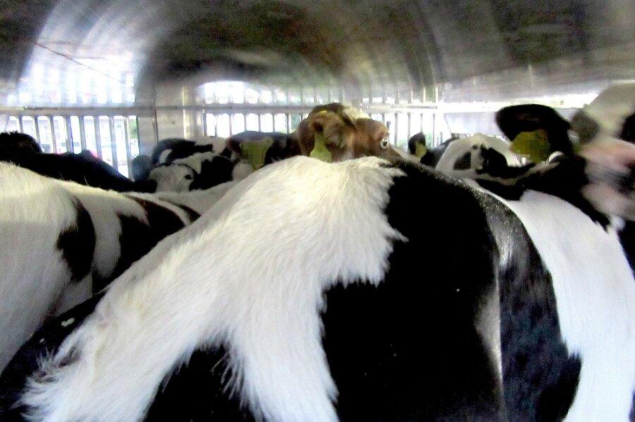 Mittweida: Zahlreiche Verstöße bei Tiertransport