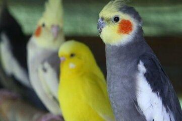 Eine farbenfrohe Vogelwelt kann am Wochenende in der Muldentalhalle in Wilkau-Haßlau bewundert werden.