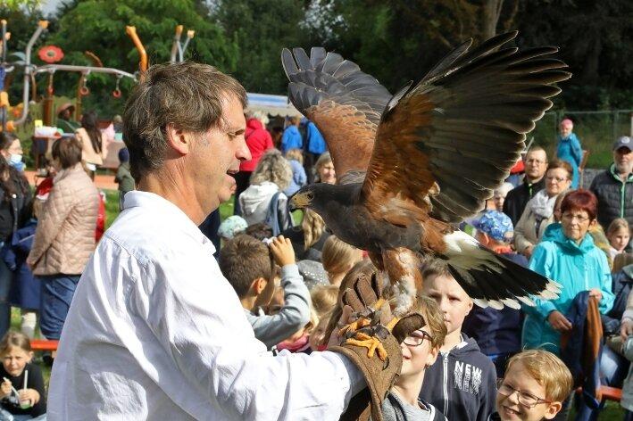 Falknerschau zum Herbstfest
