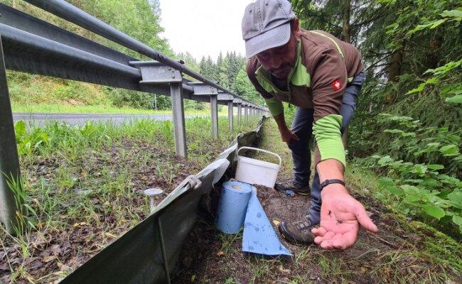 Winzlinge auf der Hand: Bernd Bauer von der GAW leert derzeit täglich die Rettungseimer für die Jungkröten am Vorbecken Rähmersbach.