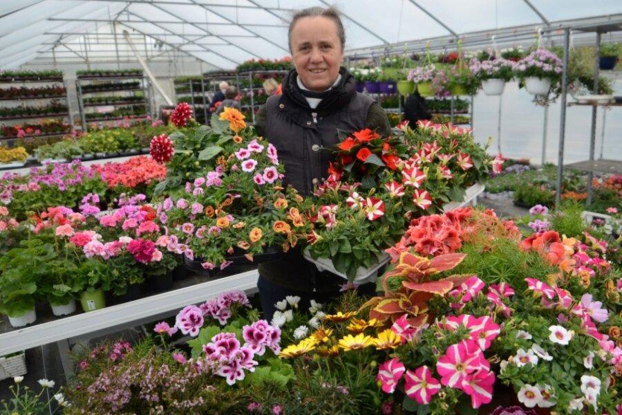 Blumenmeer zieht vom Gewächshaus auf Auerbacher Neumarkt