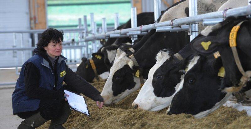 150 Milchkühe der Bräunsdorfer Milchviehanlage haben voriges Jahr einen neuen Stall bezogen. Stallleiterin Ines Seltmann (Foto) beim Rundgang. .